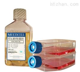 姬鼠皮膚細胞特價;FMS1