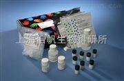 大鼠RUNX2试剂盒(Runt相关基因2)ELISA试剂盒全国质保包邮
