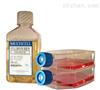 姬鼠皮肤细胞特价;FMS1